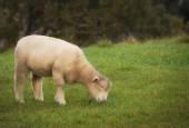 Greener Pastures — Stock Photo