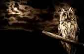 Owl and full moon halloween abstract background — Stockfoto