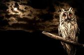 Owl and full moon halloween abstract background — Foto Stock