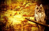 Owl abstract halloween grunge background — ストック写真