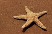 Sea sand background — Stock Photo