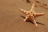 Mořská hvězda — Stock fotografie