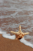 Sea star fish — Stock fotografie