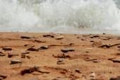 Sea sand, Crimea — Stock Photo