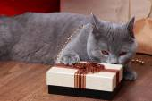 Lovely domestic animal on holiday theme — Stock Photo