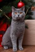 Funny cat and christmas tree — Stock Photo