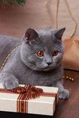 Funny cat and christmas tree — Stock Photo