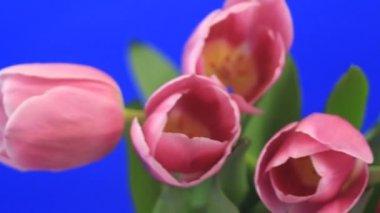 盛开的花 — 图库视频影像