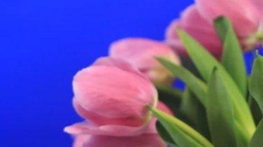Blossom flowers — Stock Video