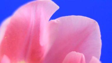 Blühen — Stockvideo