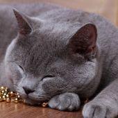 Cat on Christmas — Stock Photo