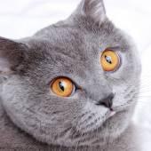 Adorable cat — Stock Photo