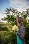 Woman picking elderflower — Stock Photo