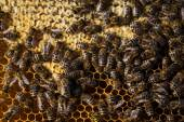 Macro shot of bees — Stock Photo