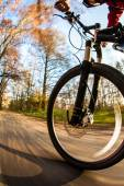 Bicycle riding in a city park on a lovely autumn — Stock Photo