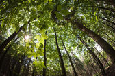 Spring forest treetops — Stock Photo