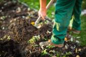 Gardening - man digging the garden soil with a spud — Stock Photo