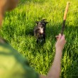 Throwing the stick for the dog — Stock Photo #62097627