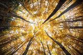Autumn forest treetops — Stock Photo