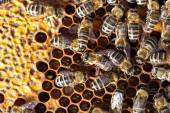 Macro shot of bees swarming — Stock Photo