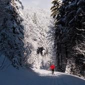 Young man cross-country skiing — Fotografia Stock