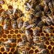 Bees swarming on a honeycomb — Stock Photo #67950297
