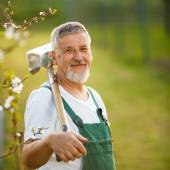 Handsome senior man gardening in his garden — Stock Photo