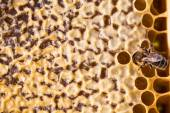 Makro-Aufnahme von Bienen schwärmen — Stockfoto