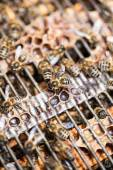 Macro shot of bees swarming — Stock Photo