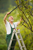 Senior man gardening in his garden — Stock Photo