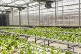 Green house plants — Stock Photo