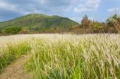 Field at sunny day — Stock Photo