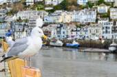 Seagull in a typically British seaside town setting — Stock Photo