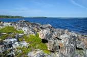 Coast of the White sea — Stock Photo