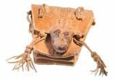Illegal crocodile leather handbag — Stock Photo