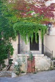 Ivy on house — Stock Photo