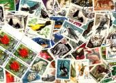 Doğa. Sovyet posta pulları — Stok fotoğraf