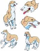 Borzoi dogs — Stock Vector