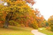 秋天的公园 — 图库照片