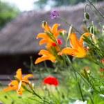 Orange lilies — Stock Photo #62826271