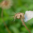 Butterfly on the stem — Stock Photo #63775543
