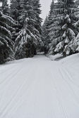 Winter path — Stock Photo