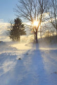 Winter landscape in strong wind — Stock Photo