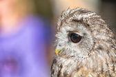Portrait of an owl — Stock Photo