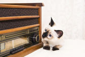 Kitten looks after the radio with a curiosity and interest — Stock Photo