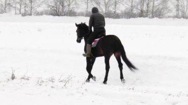 Racecourse. Check-riding — Stock Video