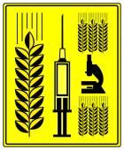 Genetically Modified Wheat — Stock Photo