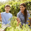 Mother And Son Working On Allotment — Stock Photo #59876349