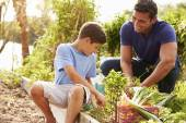 Father And Son Working On Allotment — Stock Photo