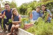 Family Working On Allotment — Stock Photo